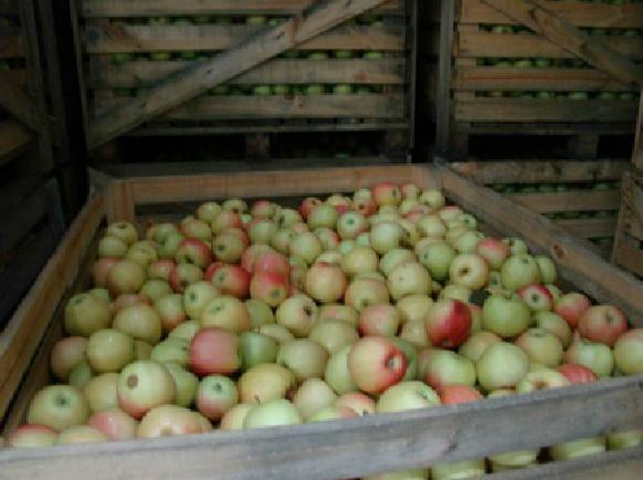 Складиране на ябълки и череши MELISA SANDANSKI