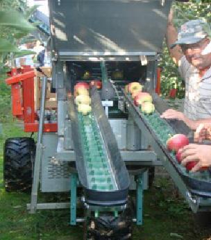 Беритба на ябълки на ръка и с помоща на машина