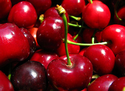 Череши-Ferrovia-от-Мелиса-Сандански-Cherry-varieties-ferrovia-cherries-from-melisa-sandanski