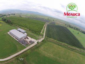 Melisa-Sandanski-Apple-Gardens---melisafruit.com